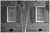 Tree and red brick facade of Texada. Natchez, Mississippi, USA (black and white)