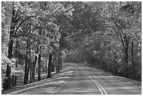 Roadway in forest. Natchez Trace Parkway, Mississippi, USA (black and white)
