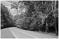 Road curve bordered by tree with Spanish Moss. Natchez Trace Parkway, Mississippi, USA ( black and white)