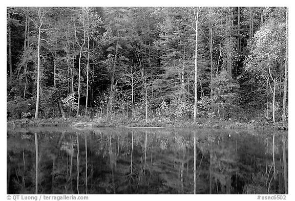 Trees in fall colors reflected in a pond, Blue Ridge Parkway. Virginia, USA (black and white)