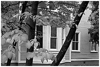 Leaves and house detail. Columbia, South Carolina, USA (black and white)