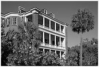Antebellum house and palm tree. Charleston, South Carolina, USA (black and white)
