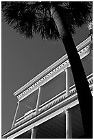 Palm tree and facade with columns, looking upwards. Charleston, South Carolina, USA ( black and white)