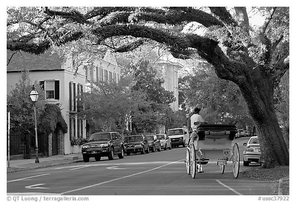 Street and horse carriage. Charleston, South Carolina, USA