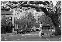 Street and horse carriage. Charleston, South Carolina, USA ( black and white)