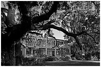Huge live oak tree and house. Beaufort, South Carolina, USA ( black and white)