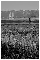 Grasses and yachts in Beaufort bay, early morning. Beaufort, South Carolina, USA ( black and white)
