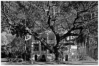 Live oak tree and brick house known as the Castle. Beaufort, South Carolina, USA ( black and white)