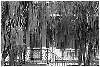 Spanish moss and house. Beaufort, South Carolina, USA ( black and white)