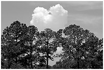 Trees and cloud, Hilton Head. South Carolina, USA (black and white)