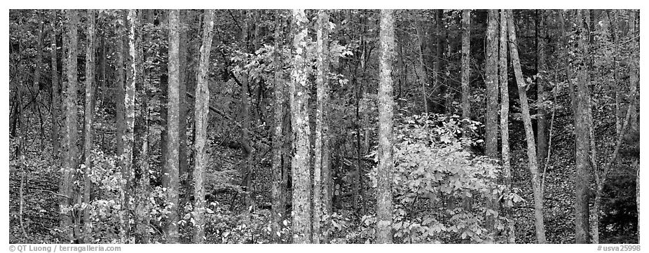 Fall forest scenery. Virginia, USA (black and white)