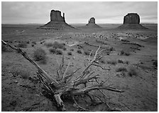Roots, red earth, and Mittens. Monument Valley Tribal Park, Navajo Nation, Arizona and Utah, USA (black and white)