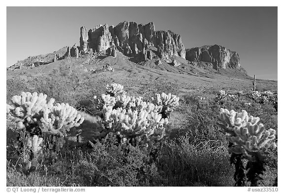 Cholla cacti and Superstition Mountains, Lost Dutchman State Park, afternoon. Arizona, USA (black and white)