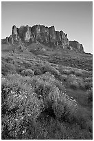 Craggy Superstition Mountains and wildflowers, Lost Dutchman State Park, sunset. Arizona, USA (black and white)
