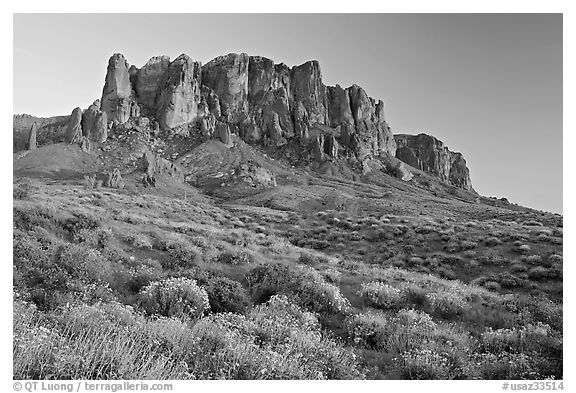 Wildflowers and  Superstition Mountains, Lost Dutchman State Park, sunset. Arizona, USA (black and white)