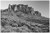 Wildflowers and  Superstition Mountains, Lost Dutchman State Park, sunset. Arizona, USA ( black and white)