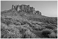 Craggy Superstition Mountains and brittlebush, Lost Dutchman State Park, dusk. Arizona, USA ( black and white)