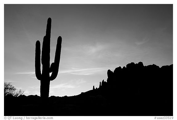 Saguaro cactus and Superstition Mountains silhoueted at sunrise, Lost Dutchman State Park. Arizona, USA (black and white)