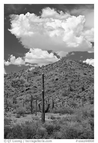 Saguaro cactus, hill, and clouds, Sonoran Desert National Monument. Arizona, USA (black and white)