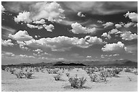 Sandy plain and clouds, Sonoran Desert National Monument. Arizona, USA (black and white)
