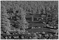 Pine trees, hardened lava, and red cinder, Sunset Crater Volcano National Monument. Arizona, USA (black and white)