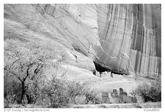 White House Ancestral Pueblan ruins with trees in fall colors. Canyon de Chelly  National Monument, Arizona, USA (black and white)