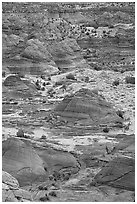 Sandstone mounds. Coyote Buttes, Vermilion cliffs National Monument, Arizona, USA ( black and white)