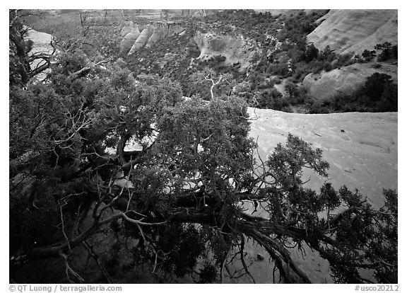 Monument Canyon view, Colorado National Monument. Colorado National Monument, Colorado, USA (black and white)