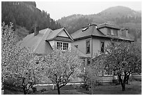 Flowering trees and houses. Telluride, Colorado, USA ( black and white)