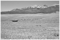 Meadow, Sangre de Cristo range. Colorado, USA (black and white)