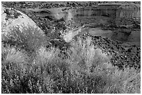 Indian Paintbrush and sandstone cliffs. Colorado National Monument, Colorado, USA ( black and white)