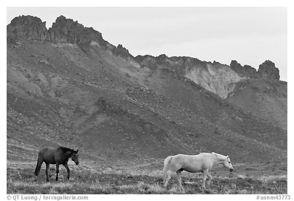 Wild horses. Shiprock, New Mexico, USA (black and white)