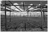 Drying rack in field. Taos, New Mexico, USA ( black and white)