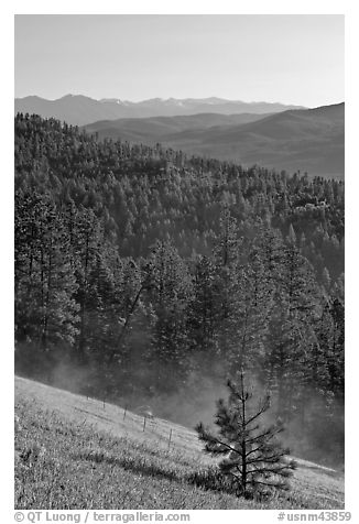 Slope with meadow and forest, Carson National Forest. New Mexico, USA (black and white)