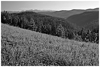 Wildflowers, forest and mountains, Carson National Forest. New Mexico, USA (black and white)