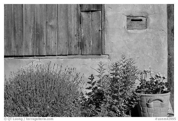 Flowers, mailbox, and weathered window. Santa Fe, New Mexico, USA (black and white)