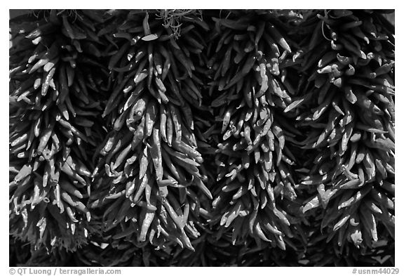 Close up of ristras. Santa Fe, New Mexico, USA (black and white)