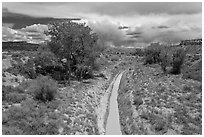 Arroyo and cottonwoods. Chaco Culture National Historic Park, New Mexico, USA ( black and white)