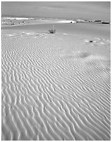 Ripples in sand dunes. White Sands National Monument, New Mexico, USA (black and white)