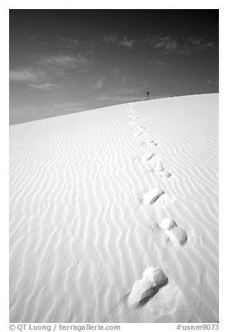 Footprints. White Sands National Monument, New Mexico, USA (black and white)