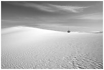 Lone Yucca and white sand dunes, White Sands National Monument. New Mexico, USA ( black and white)