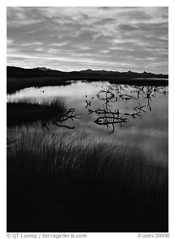 Reeds and branches in marsh, sunrise, Havasu National Wildlife Refuge. Nevada, USA