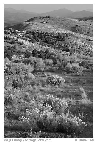 Sagebrush and hills, Virginia City, Nevada. Virginia City, Nevada, USA (black and white)