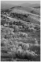 Sagebrush and hills, Virginia City, Nevada. Virginia City, Nevada, USA ( black and white)