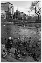 Woman feeding ducks on steps of Truckee River. Reno, Nevada, USA (black and white)