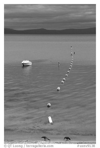 Two birds, buoy line and boat, South Lake Tahoe, California. USA (black and white)