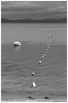 Two birds, buoy line and boat, South Lake Tahoe, California. USA ( black and white)