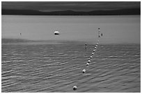 Buoy line, South Lake Tahoe, California. USA ( black and white)