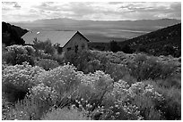 Sage in bloom and cabin, Snake Range. Nevada, USA (black and white)