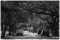 Tree-line street, Museum District. Houston, Texas, USA ( black and white)